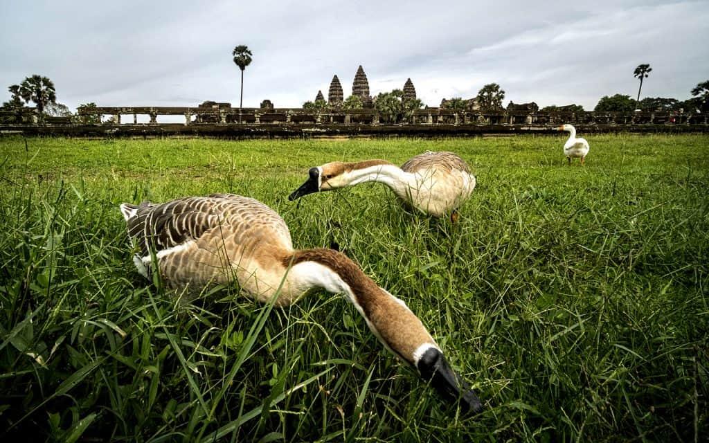 Angkor Wat Daily Tour