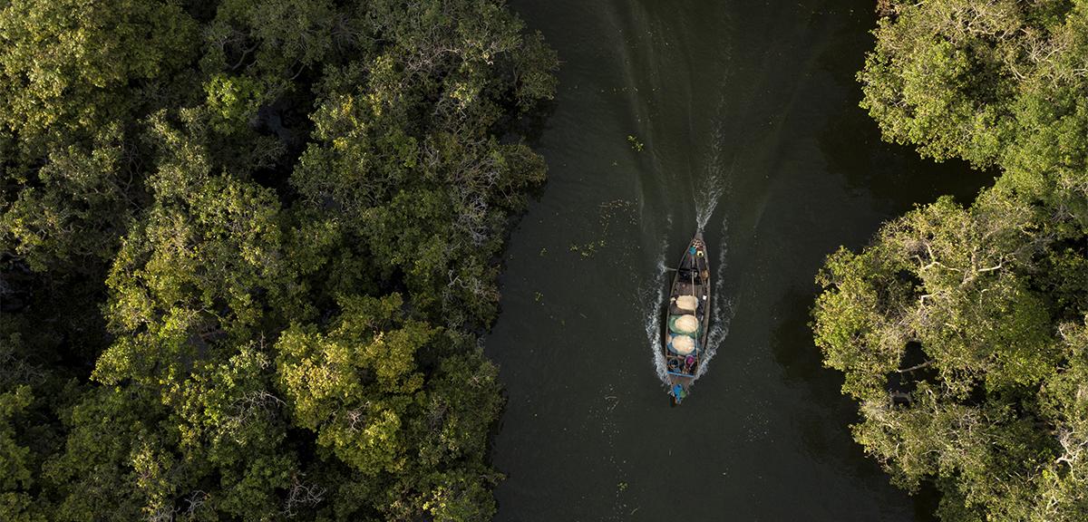Fishing boat and Mangrove Forests at Kampong Pluk Tonle Sap Lake
